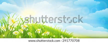 Summer meadow background  with green grass, daisies, sky and sun - stock vector