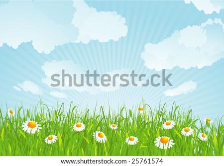 Summer meadow. Vector background. - stock vector