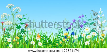 Summer meadow with wild flowers and herbs.