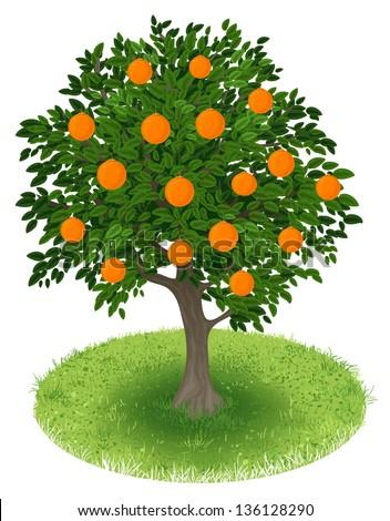 Summer Orange Tree with orange fruits in green field, illustration - stock vector