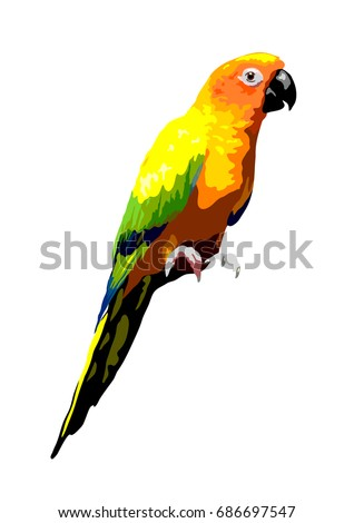 sun conure parrot illustration, isolated tropical bird vector