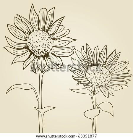 sunflower background - stock vector