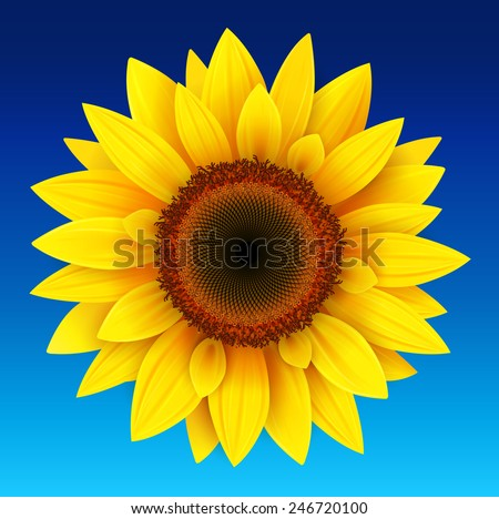 Sunflower background, yellow flower over blue sky, vector illustration. - stock vector