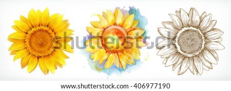 Sunflower, different styles, vector drawing, icon set - stock vector