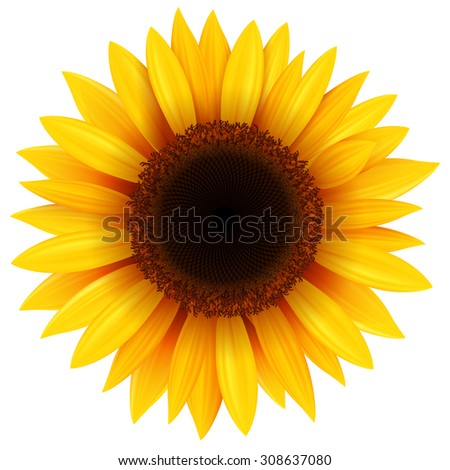 Sunflower isolated, vector illustration. - stock vector