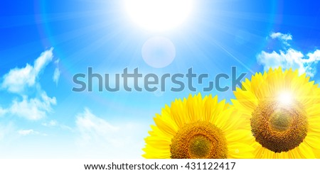 Sunflower summer landscape background