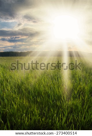 sunset in the fields, vector - stock vector