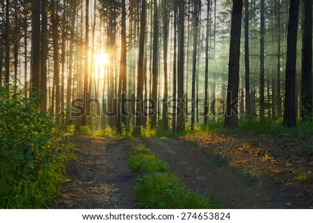 sunset in the forest, vector - stock vector