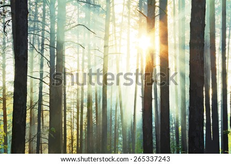 sunset in the woods, vector