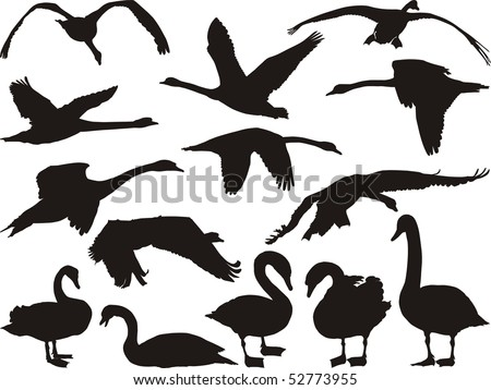 Swan silhouette in different positions