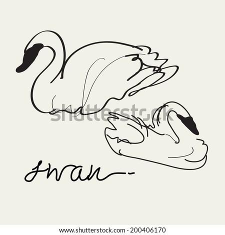 Swan Vector drawing, Eps 10 - stock vector