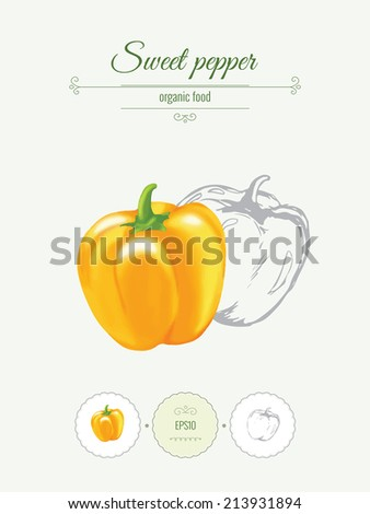 Sweet pepper. Banner with illustration of vegetables, organic food icons and beautiful frames. Realistic vector illustration with a sketch.  - stock vector