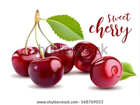 Sweet Vector 3D Realistic Cherry, isolated on white background.