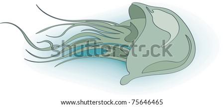 swimming jelly-fish illustration - stock vector