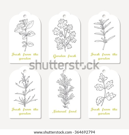 Tags collection with hand drawn spicy herbs. Sketched oregano, cilantro, savory, tarragon, rosemary, parsley. Culinary background. Vector illustration - stock vector