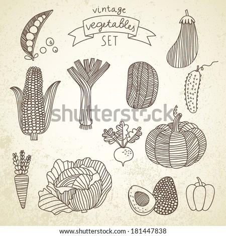 Tasty vegetables in vector set - green peas, eggplant, potato, carrot, pumpkin, avocado, leek, corn, cucumber, cabbage, radish, pepper. Vintage vegetarian concept collection - stock vector