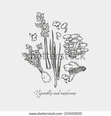Tasty vegetables in vector set - mushrooms, chanterelles, butter mushrooms, celery, celery root. Vegetarian concept collection - stock vector