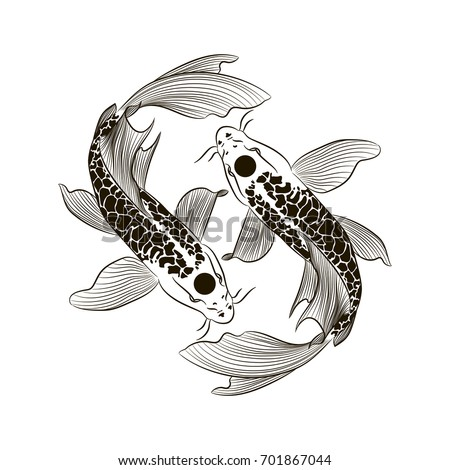 Traditional asian dragon vector illustration isolated for Black white koi