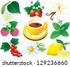 Tea herbal set, cup of tea - stock vector