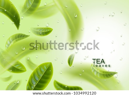 Black Tea Leaves Plant Growing And Producing Tea How Tea