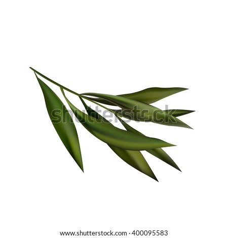 Tea Tree Realistic Branch Icon.  Object Isolated On White Background
