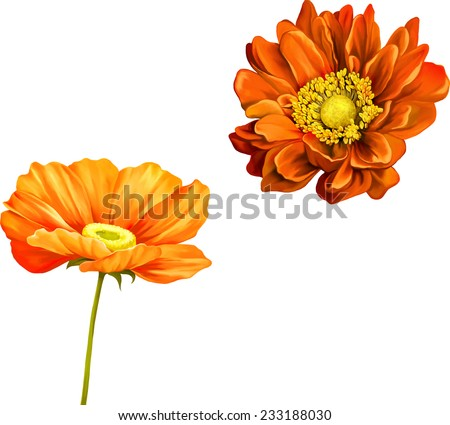 Tender pink poppy flower isolated on white background, very beautiful bright orange flower - stock vector