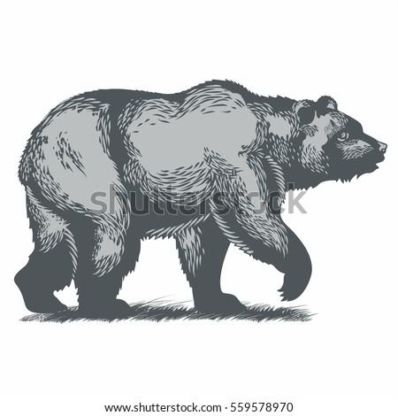 Bear Illustration Vector Stock Vector 559578484 - Shutterstock Walking Bear Drawing