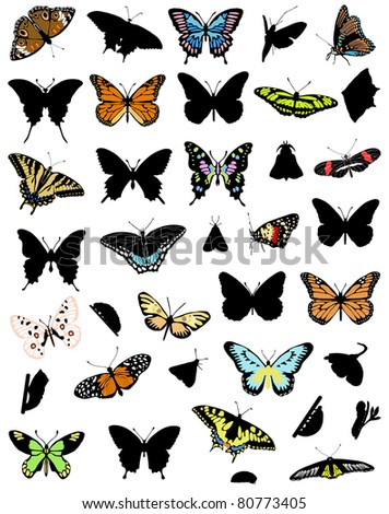 The big collection of butterflies