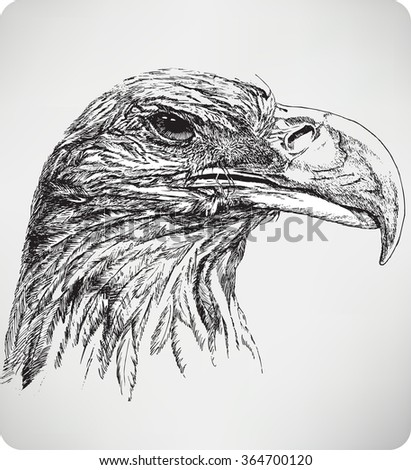 The bird's head eagle, hand drawing, vector illustration. - stock vector