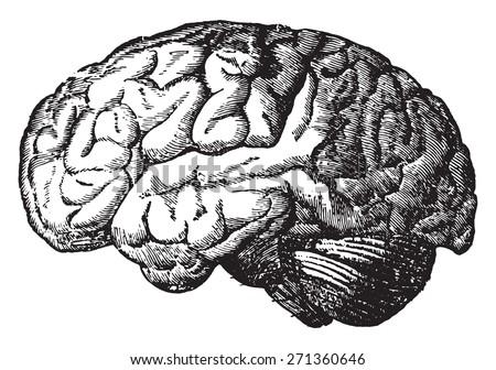 Brain Vintage Engraved...