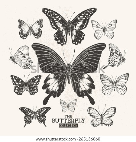 The Butterfly Collection. A collection of hand drawn butterflies, vintage set. Vector illustration. - stock vector