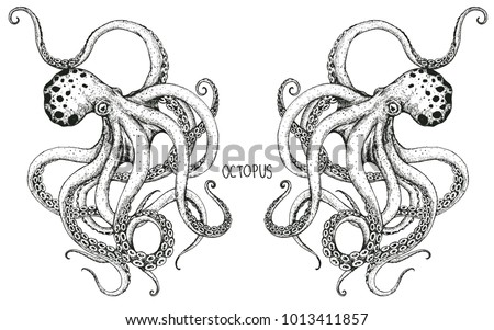 Charmant The Couple Octopus Hand Drawing.
