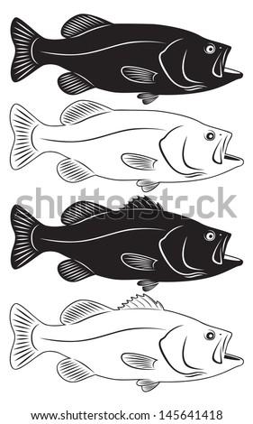 the figure shows sea bass - stock vector