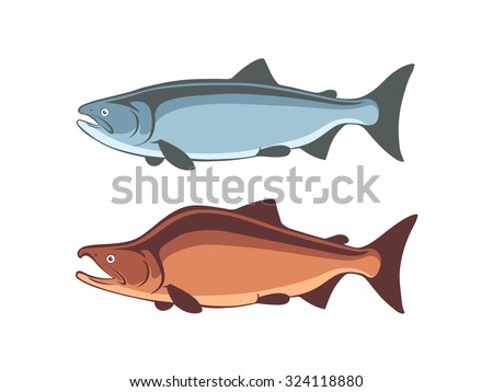 the figure shows the fish salmon - stock vector