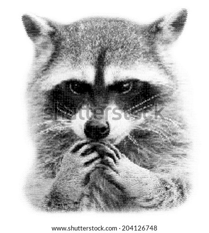 The head and hands of a cute and cuddly raccoon, that can be very dangerous beast. Unusual beauty of the wildlife. Human like expression on the animal face. Amazing vector image, made of square dots. - stock vector