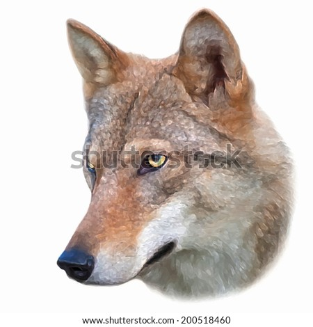 The head of a young wolf female, isolated on white background. Side face portrait of a forest dangerous beast, Canis lupus lupus. Beauty of the wildlife. Amazing vector image like oil painting. - stock vector