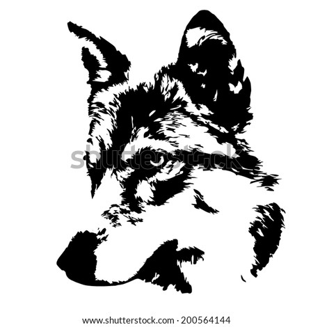 The head of a young wolf female, isolated on white background. Side face portrait of a forest dangerous beast, Canis lupus lupus. Beauty of the wildlife. Amazing black and white vector image. - stock vector