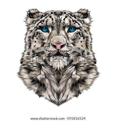 Jaguar teeth drawing