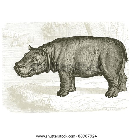 "The hippopotamus - Vintage engraved illustration - ""Cent récits d'histoire naturelle"" by C.Delon published in 1889 France"