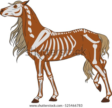 The horse in profile. Figure skeleton.