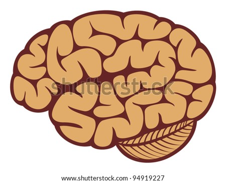 The human brain - stock vector