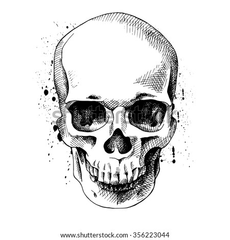 skull stock images, royalty-free images & vectors | shutterstock, Human Body