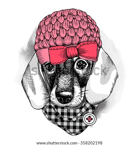The image with the portrait of the dog Dachshund in the knitted hat with the cravat. Vector illustration. - stock vector