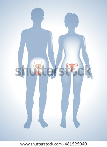 The male and female reproductive systems. Silhouettes of men and women with sexual organs. This work - eps10 vector file,