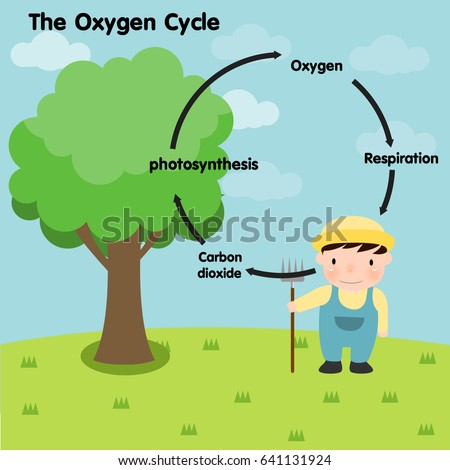 the oxygen carbon cycle Their is recycled air in the carbon dioxide and oxygen cycle and no recycled air in the carbon cycle.