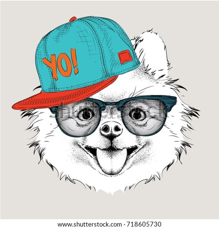 The poster with the image dog portrait in hip-hop hat. Vector illustration of chihuahua