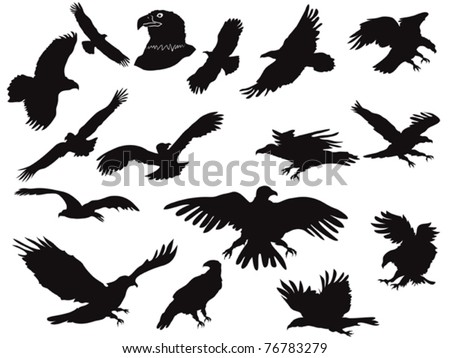 the set of eagles silhouette - stock vector