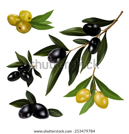 The set of green and black olives with leaves. vector illustration.