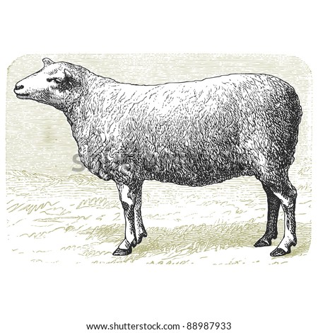 """The sheep -Vintage engraved illustration - """"Cent récits d'histoire naturelle"""" by C.Delon published in 1889 France - stock vector"""