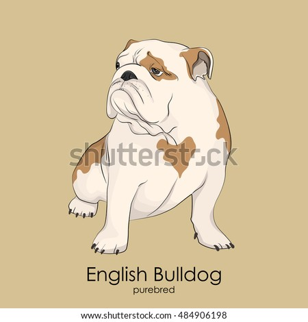 English Bulldog Stock Photos, Royalty-Free Images ...